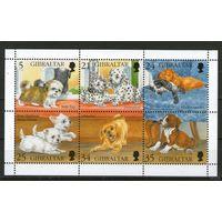 Собаки, фауна, Гибралтар, блок