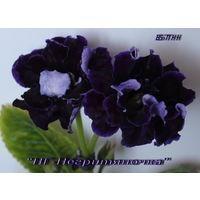Глоксиния НГ-Негритяночка (Н. Гришина)