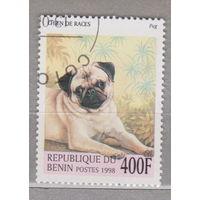 Собаки фауна Бенин 1998г лот 2