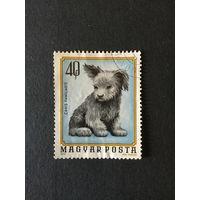 Щенок. Венгрия,1974, марка из серии