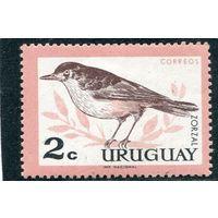 Уругвай. Рыжебрюхий дрозд