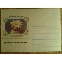 1983 не маркированный конверт Пелецифора
