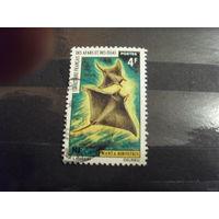 1971 Французская колония Территория Афаров и Иссу фауна рыбы (5-4)