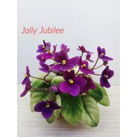Фиалка  полумини Jolly Jubilee - св. лист