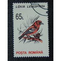 Румыния. Птицы.