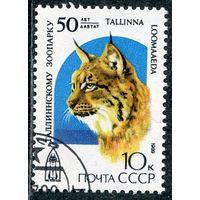 СССР 1989.. Таллинский зоопарк. Рысь