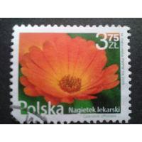 Польша 2009 стандарт, цветы
