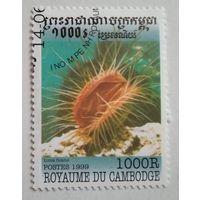 Камбоджа 1999. Моллюск