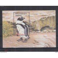 Мозамбик - MNH - Животные - Птицы - Пингвины