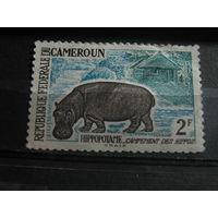 Марки - фауна, Камерун, чистая, бегемот