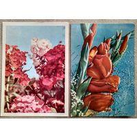 Ананьины. Гладиолусы. Флоксы. Минск. тип. Звязда. 1968-69 г. Чистые. 2 открытки.