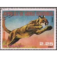 Кошки. Экваториальная Гвинея 1977. Пума. Марка из серии. Гаш.