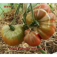 Семена томата Dwarf Bunte Pflaume