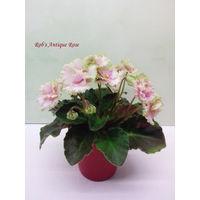 Фиалка полумини Rob's Antique Rose - детка  (фото в лоте)